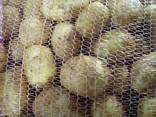 Картофель молодой - фото 1