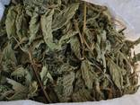 Лекарственные растения (сырье) - фото 4