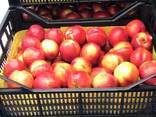 Sweet and juicy Peach, Nectarine and Cherry time. - photo 6