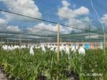 Теневая сетка - защита от непогоды для агроплощадок - photo 3