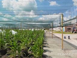 Теневая сетка - защита от непогоды для агроплощадок - photo 8