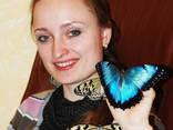 Живые бабочки - продажа готового бизнеса, франшиза. - фото 4
